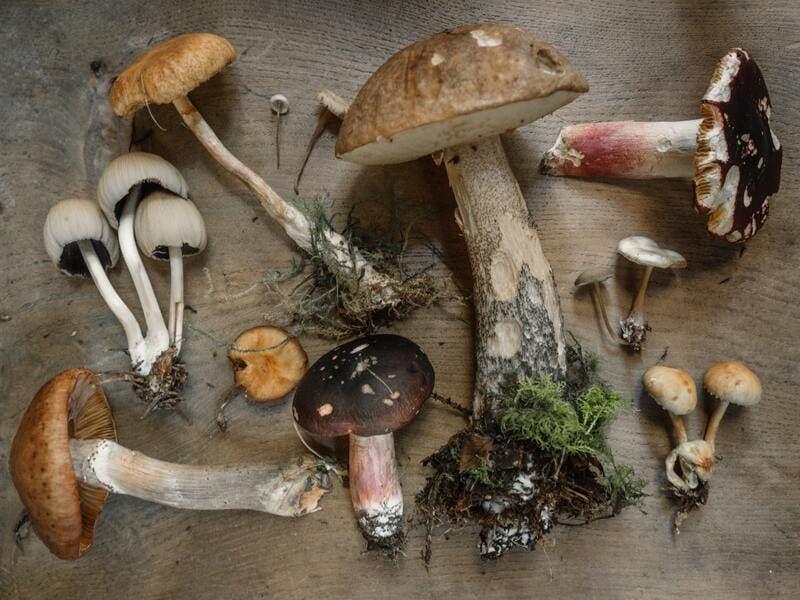 Fantastic fungi': el documental sobre el potencial que tienen los hongos  para cambiar nuestra relación con la naturaleza