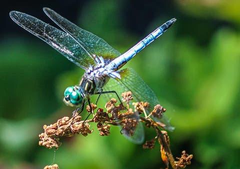 Insectos: los pequeños grandes guardianes del equilibrio natural