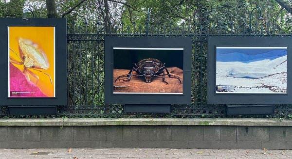 Mosaico Natura México: una exposición al aire libre