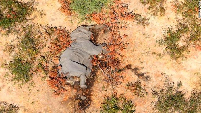 Muerte misteriosa de elefantes en Botswana