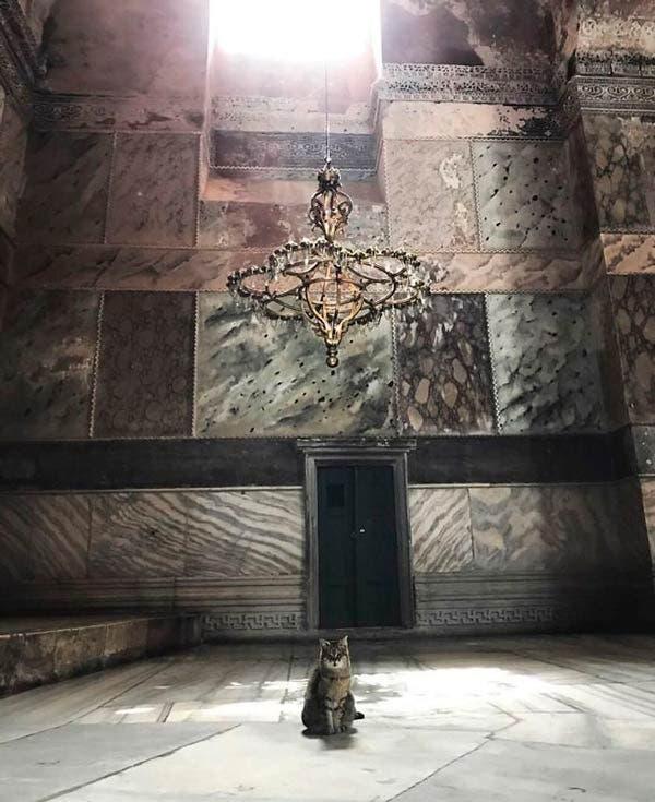 Gil, el gato en la catedral de Santa Sofía en Estambul