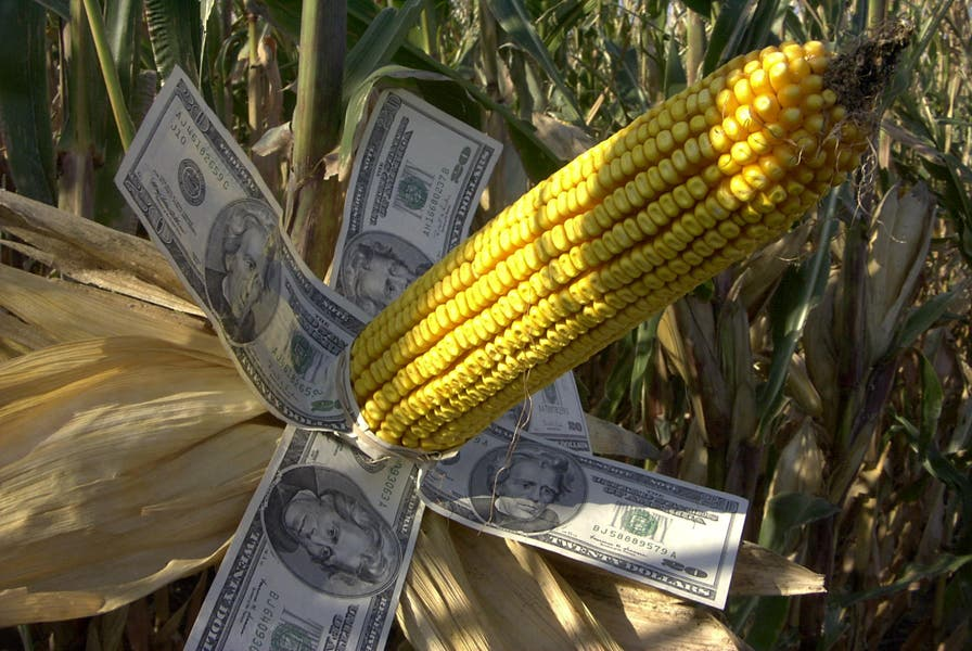 corn_is_money