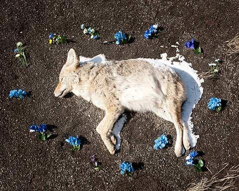 Animales Muertos En La Carretera Un Hermoso Elogio A La